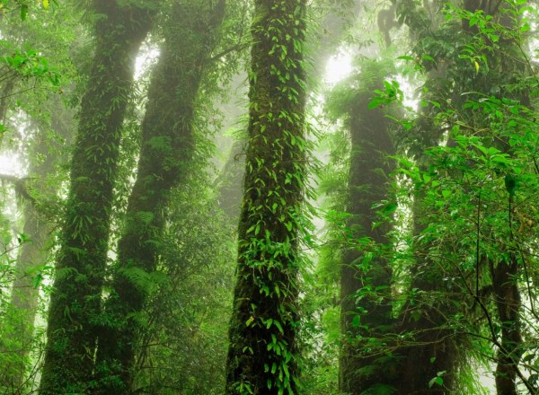 Mr Perswall - Destinations - Rainforest