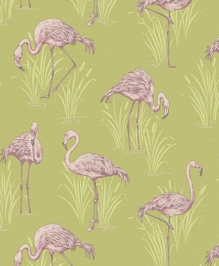 Flamingo Wallpaper - Flamboyant & Eye Catching
